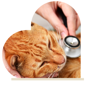 Minimally Invasive Surgery for Cats and Dogs in Phoenix - CARE Surgery Center
