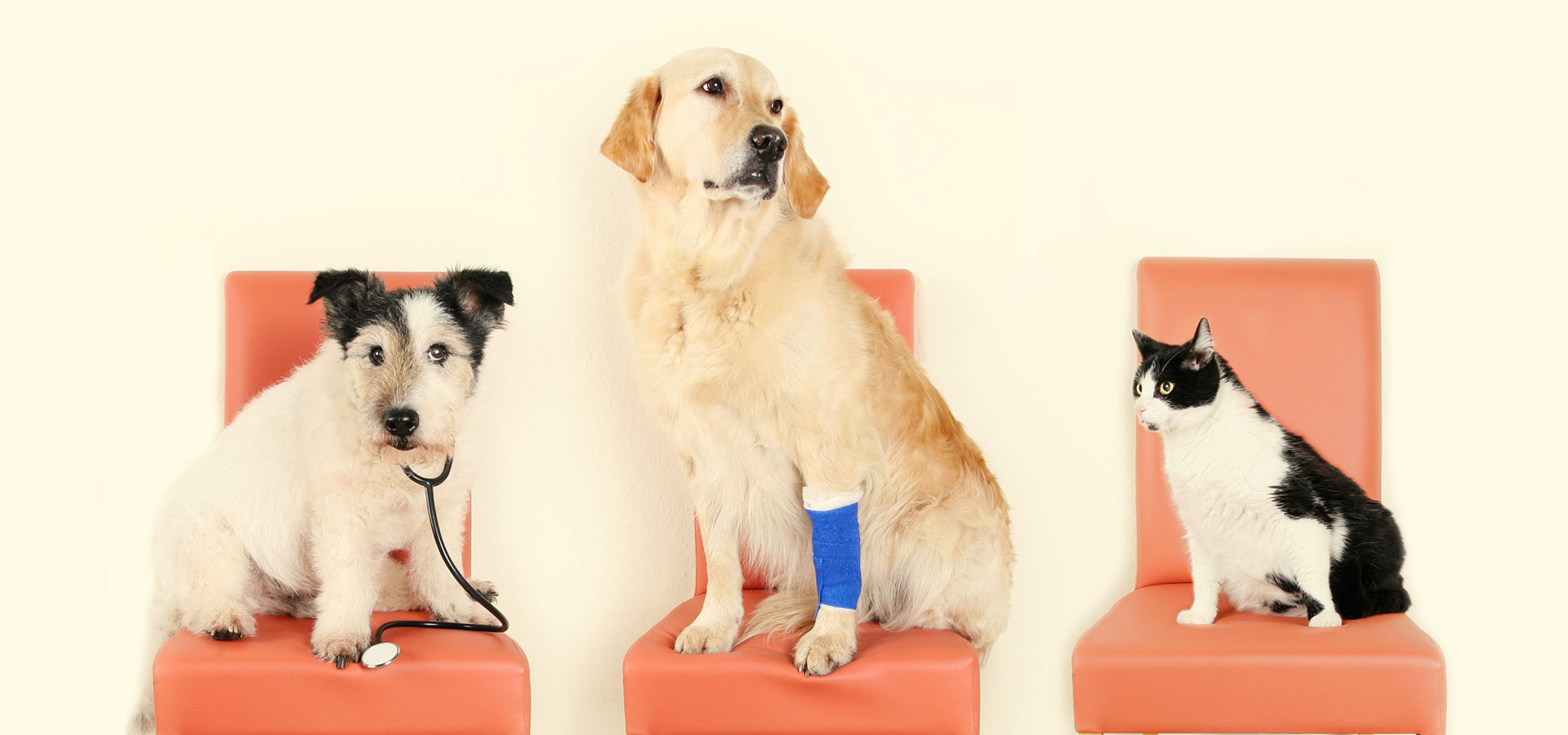 Minimally Invasive Surgery for Dogs and Cats - CARE Surgery Center