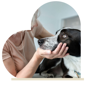 Resources for Pet-Owners - CARE Surgery Center - Glendale, Arizona
